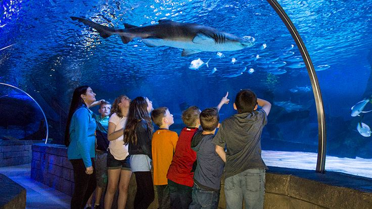 SEA LIFE® Minnesota Aquarium | Mall of America®