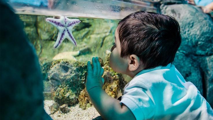 SEA LIFE® Minnesota Aquarium | Mall of America®